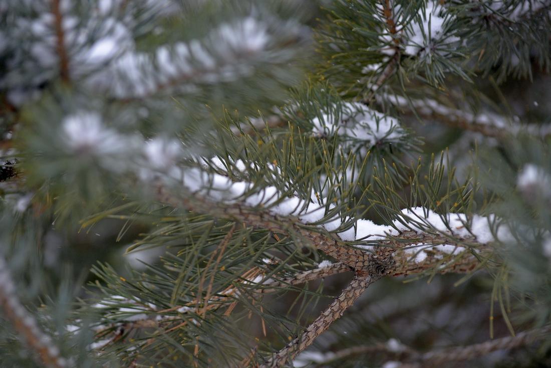 Снежный Крещенский сочельник: ФОТО