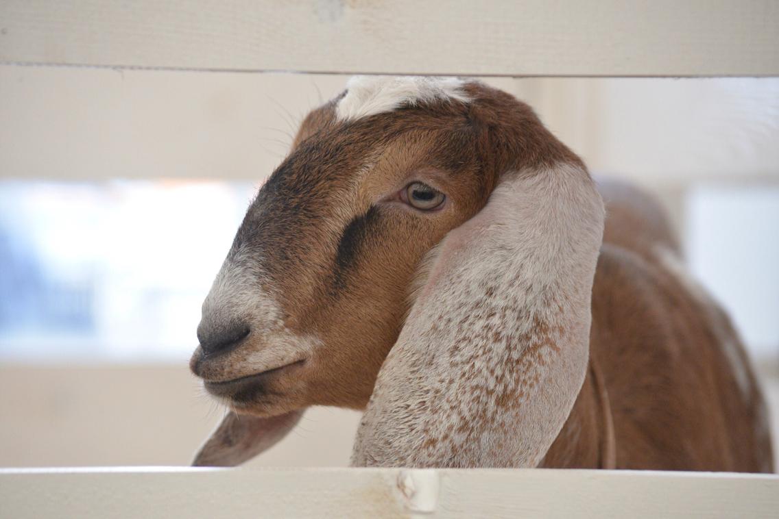 Выставка животноводства: ФОТО
