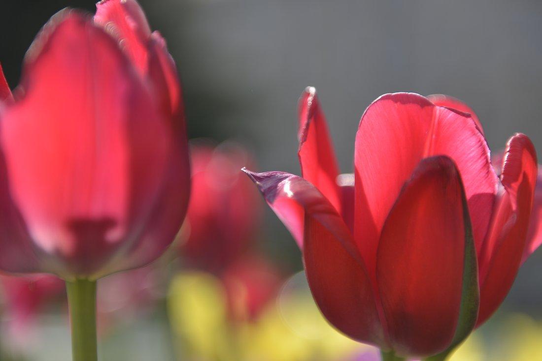 Тула в цвету: ФОТО