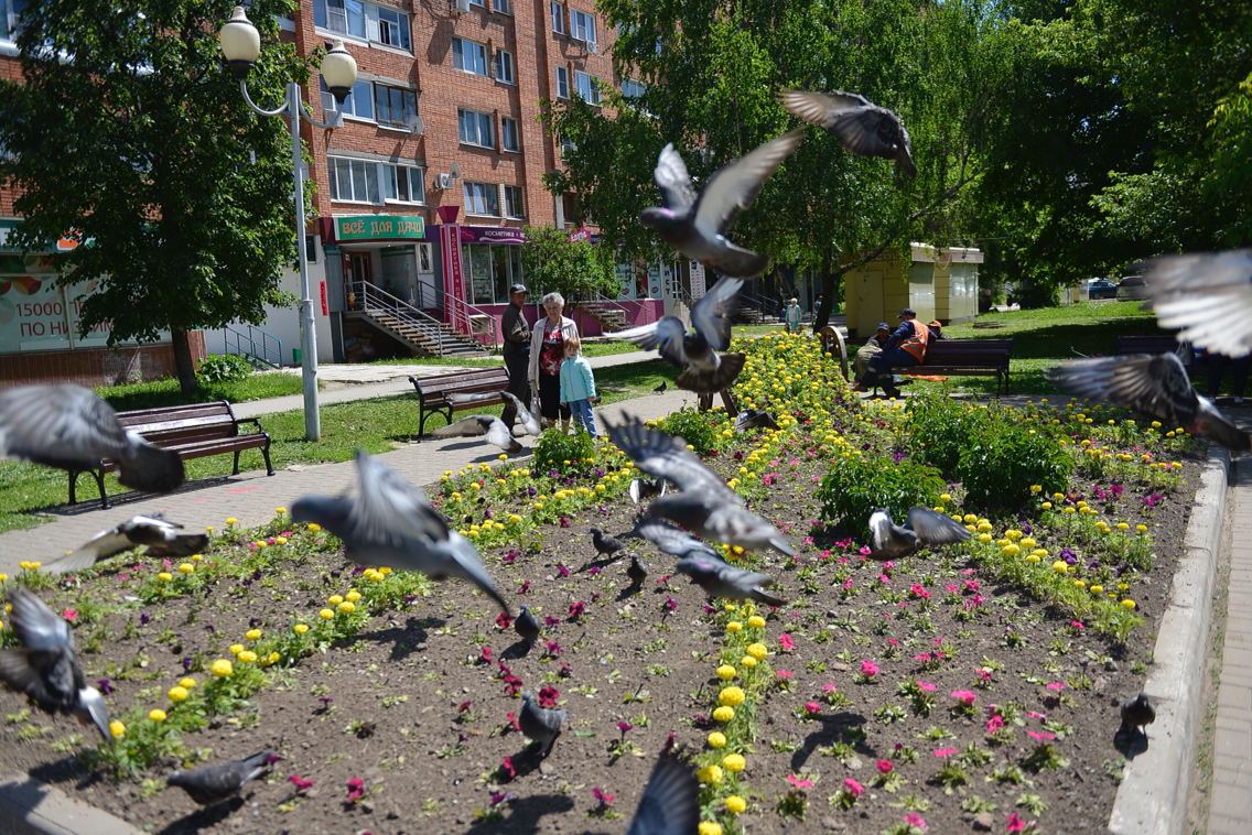 В Туле установили телегу с цветами: ФОТО