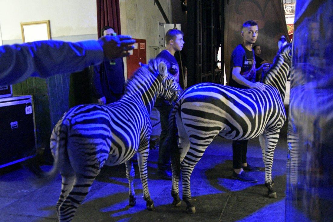 Королевский цирк приехал в Тулу: ФОТО