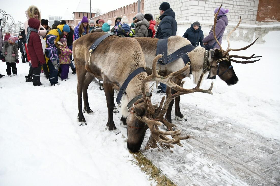 Олени, медведи и шаманы в Туле: ФОТО
