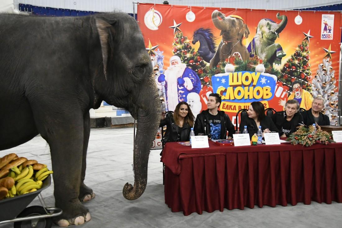 Презентация новой цирковой программы: ФОТО