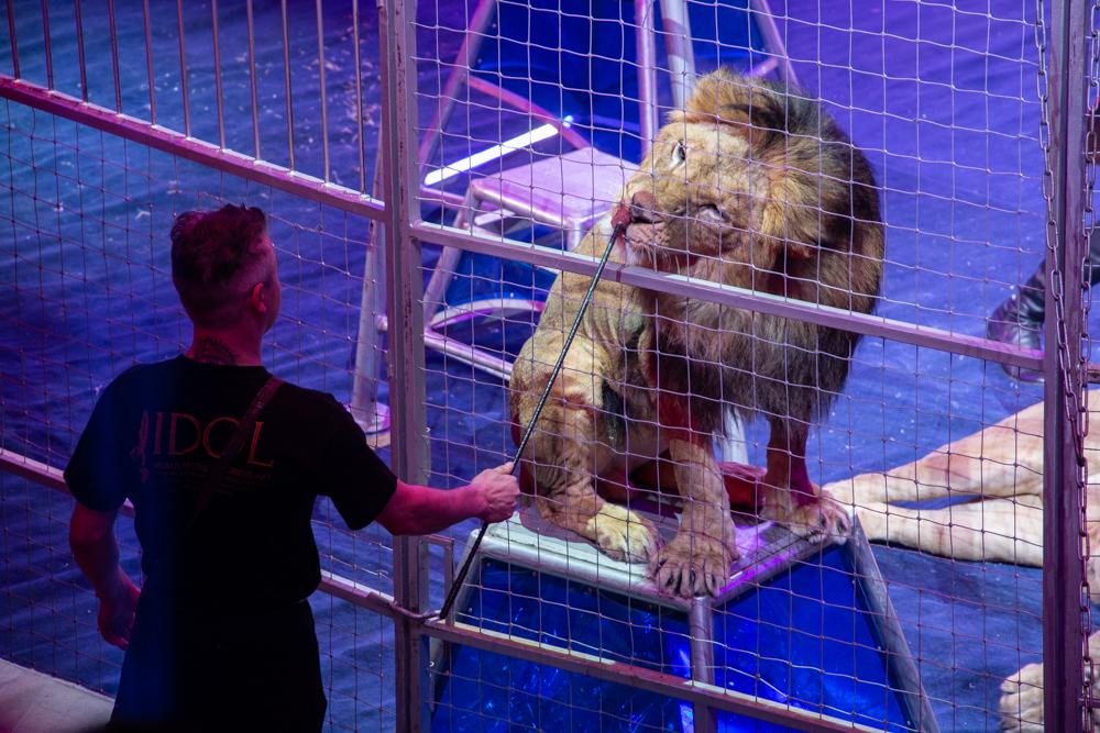 Пришельцы в Тульском цирке: проект «OFU. Приземление». ФОТО