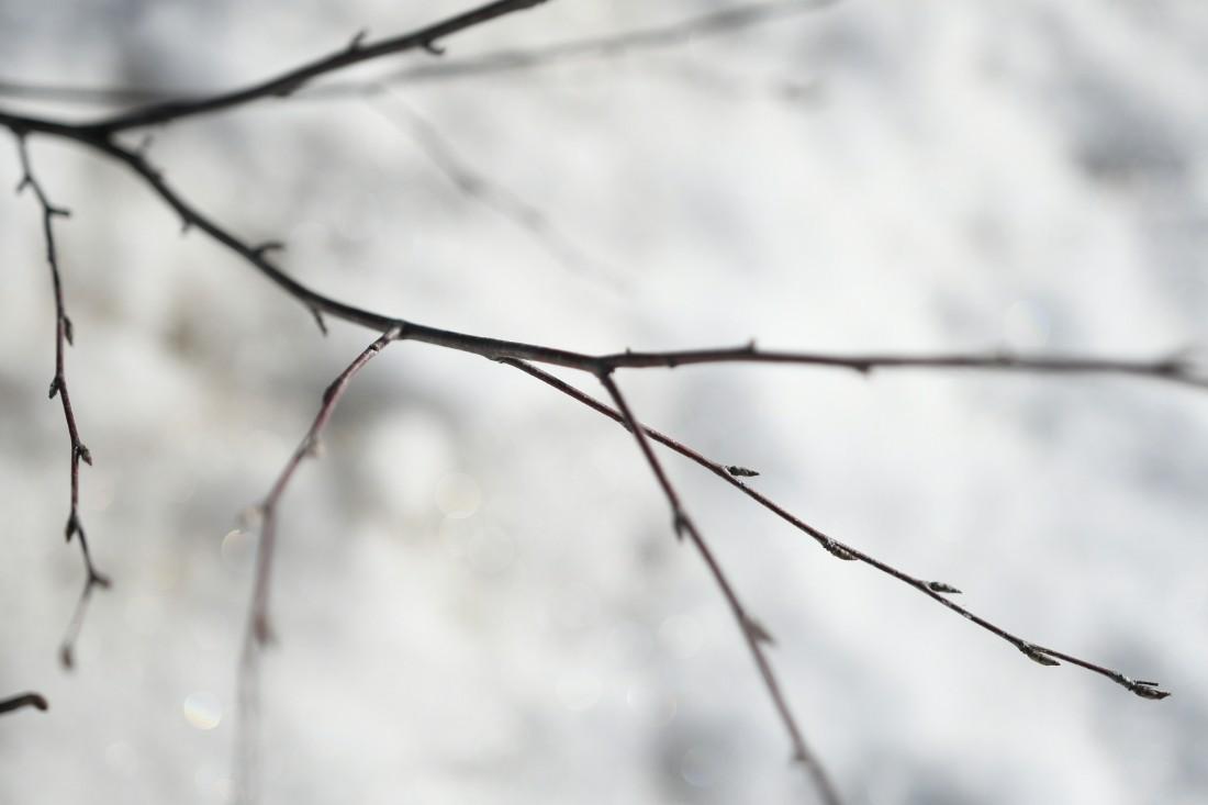 Предчувствие весны: ФОТО