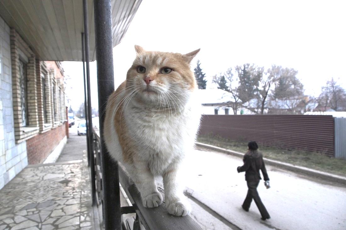 Котики навсегда: ФОТО