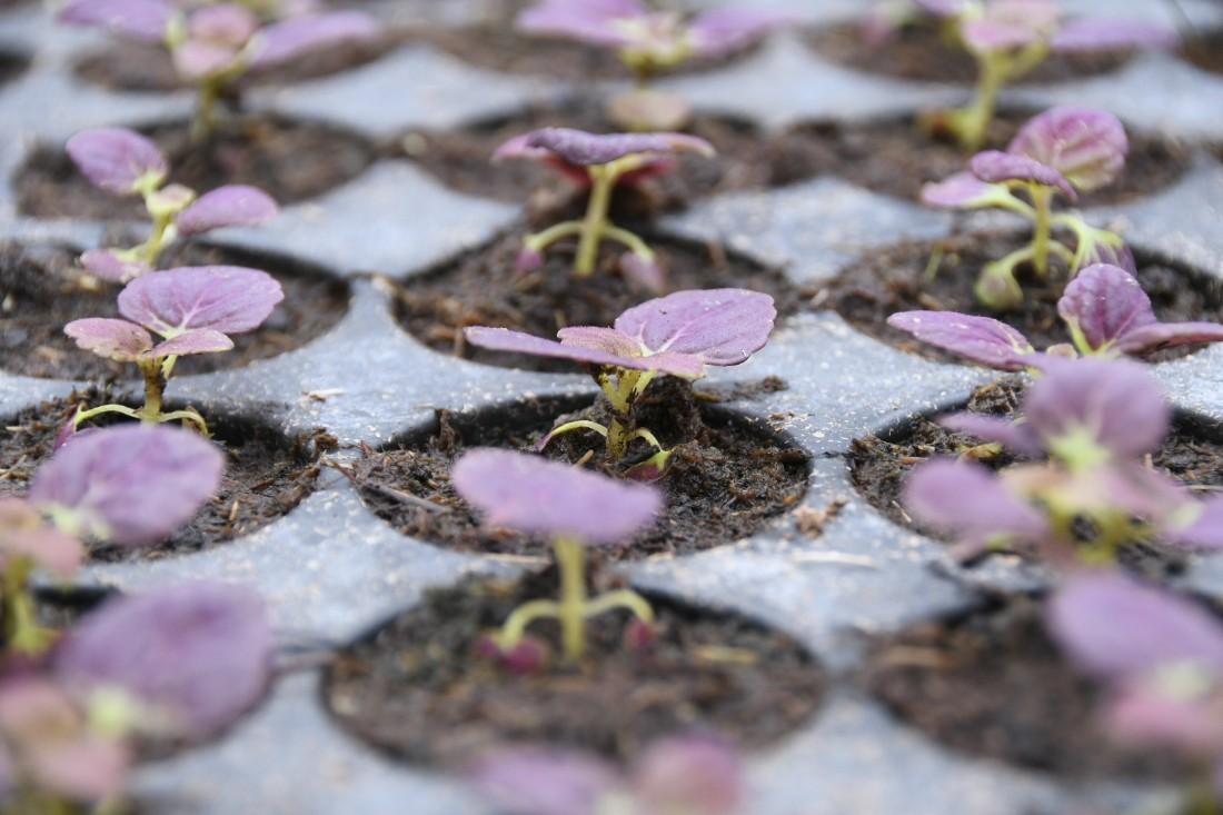 Цветы для тульских улиц: ФОТО