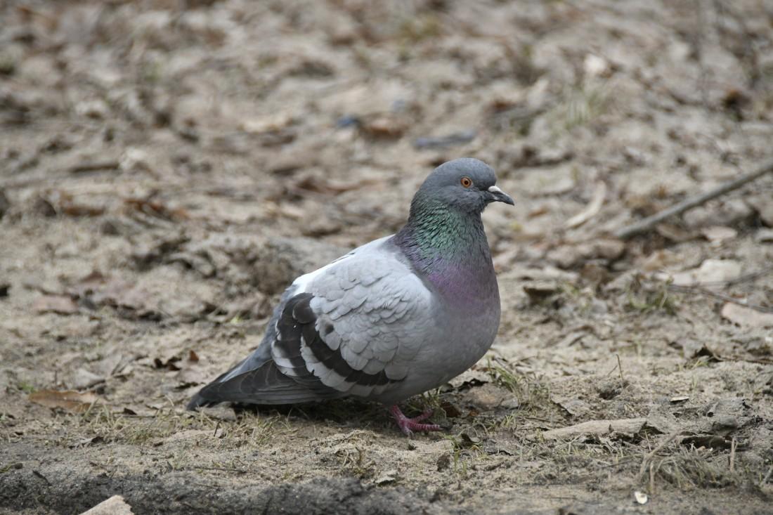 Мы вас ждём, товарищ птица: ФОТО