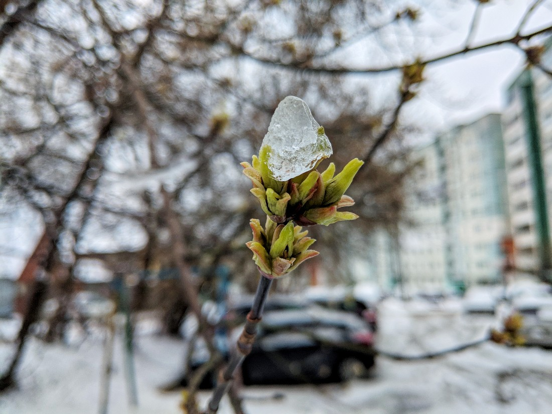 Снег в середине апреля: ФОТО