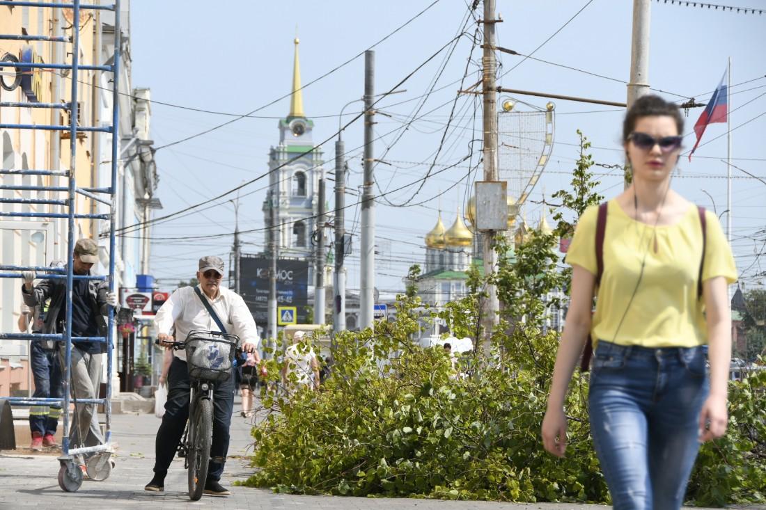 На проспекте Ленина заменяют усохшие липы: ФОТО