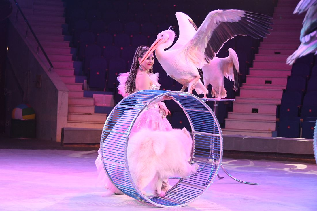 Презентация цирка Филатовых в Туле: ФОТО