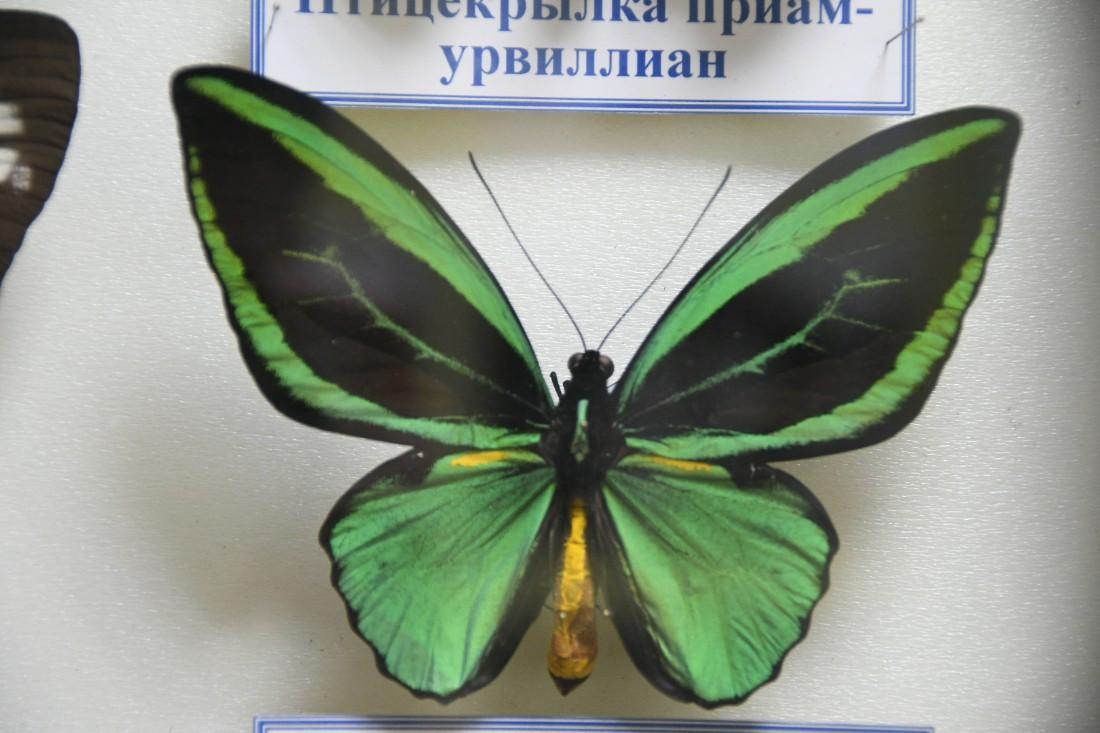 Выставка бабочек в Комнате истории парка: ФОТО