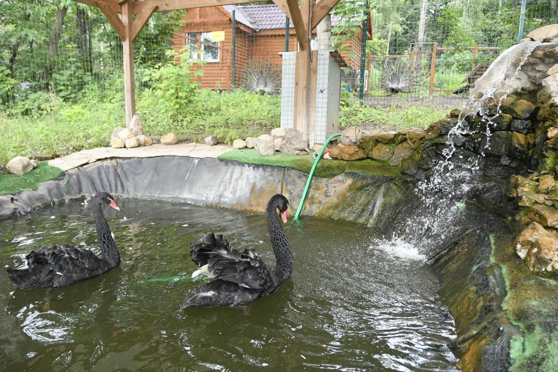 Новый домик для лебедей в парке: ФОТО