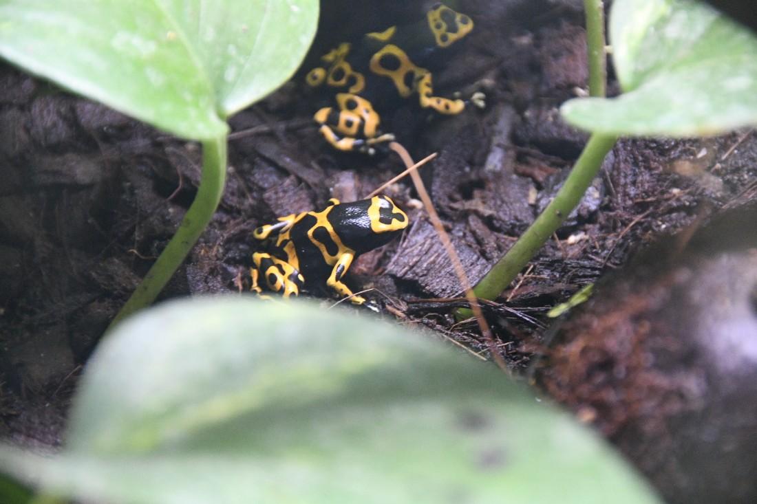 Разноцветные лягушки Тульского экзотариума: ФОТО
