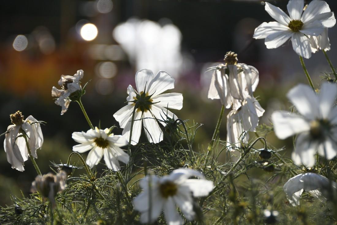 Солнечный осенний денёк: ФОТО